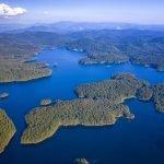 Skąd się bierze woda w lesie?