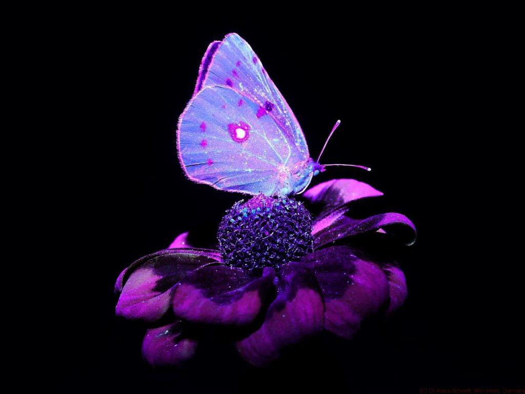 Moty w świetle UV