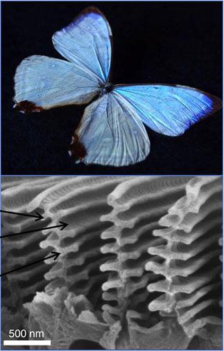 Zdjęcie nanostruktr na skrzydłach motyli