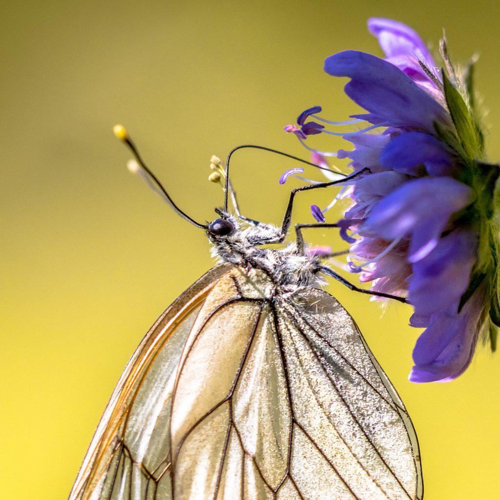 Zdjęcie trąbki motyl