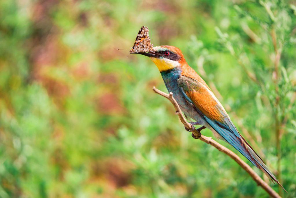 Zdjęcia ptaka z motylem w dziobie