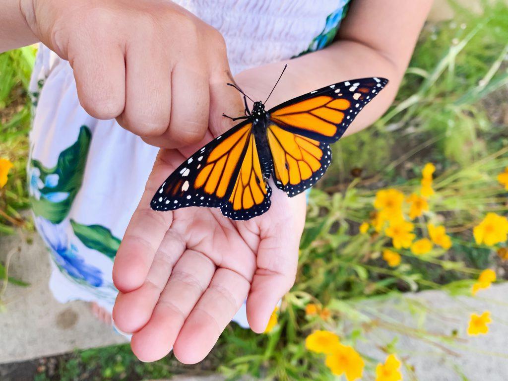 Zdjęcie motyla na ręce dziewczynki